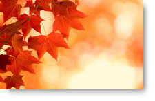Autumn Leaves - background