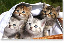 Curious Kittens - background