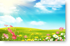 Spring Flowers - background