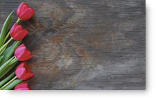 Tulips on Old Wood - background