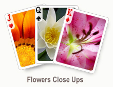 Flowers Close Ups - card set