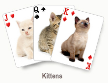 Kittens - card set