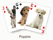 Puppies - card set