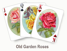 Old Garden Roses - card set